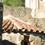 esglesia-de-tapioles-vallgorguina-barcelona